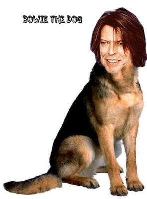 Bowie the Dog