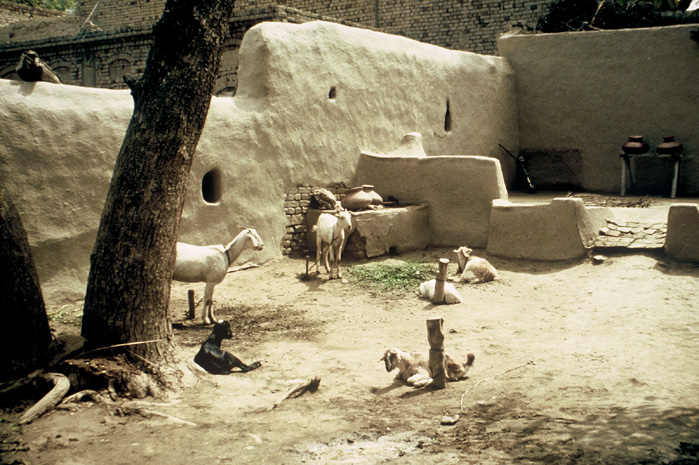 a history of harappa culture of the indus valley The most striking deity of the harappa culture is the  how the indus valley civilization came to  stock breeding was important in indus culture.