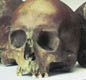 These skulls were found in a small London river. It�s possible they are the skulls of people killed when Boudicca's army attacked the Roman city.