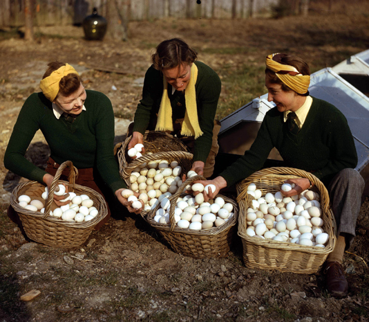 Land army girls did lots of jobs on the farm these young women were