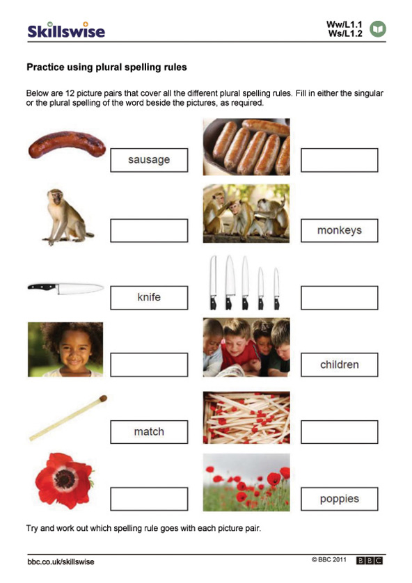 Practice Using Plural Spelling Rules