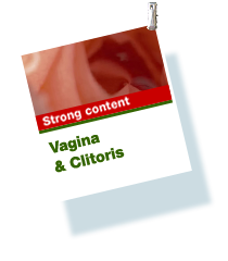 Vagina & clitoris